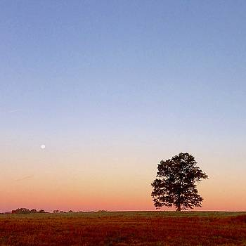Moonset at Sunrise by Lexi Heft