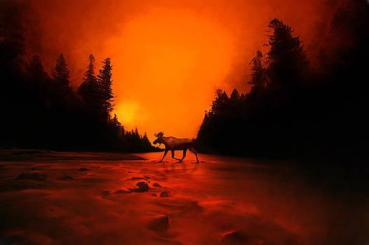 Moose Crossing by Greg Grupenhof