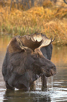 Adam Jewell - Moose Drool In The Wetlands