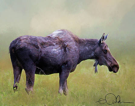 Moose in a field by Gloria Anderson