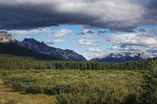 Moose Meadows, Alberta by Heather Vopni