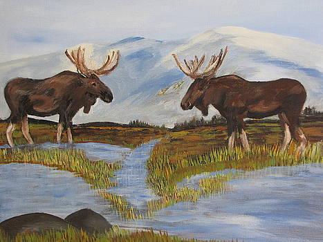 Moose Meeting by Aleta Parks