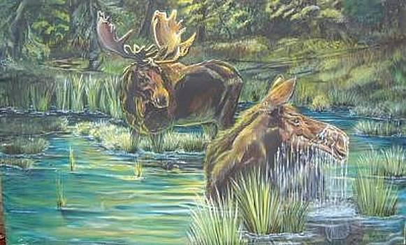Moose  by Merideth Van Every