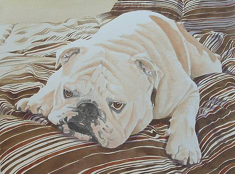 Moose the British Bulldog by Frances Evans