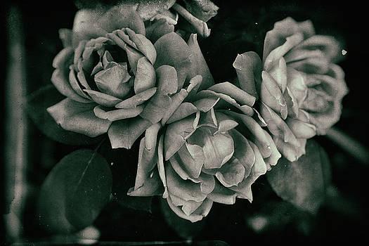 More Flora by Kaos Studios
