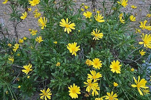 Tommi Trudeau - More Springtime Flowers in Malibu