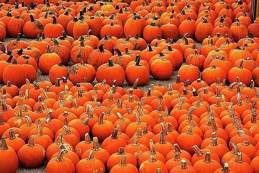 More than a peck of pumpkins at Pecks Produce Farm Market by R V James
