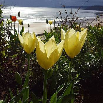 More Tulips At The #seaside by Dante Harker