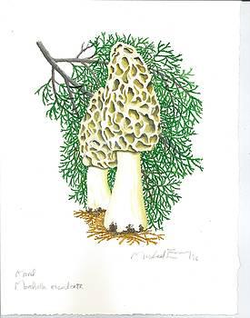 Michael Earney - Morel Mushroom