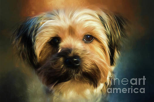 Morkie Portrait by Eleanor Abramson