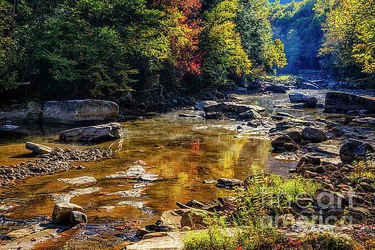 Morning along Williams River by Thomas R Fletcher