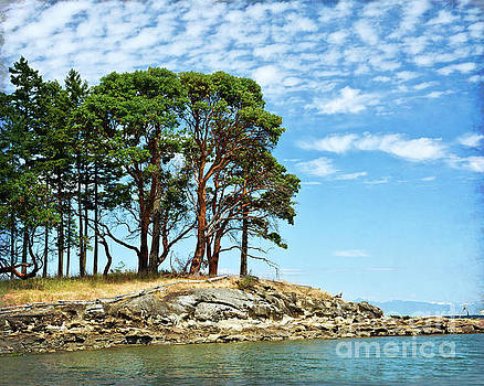 Morning Beach Arbutus Trees by Maria Janicki
