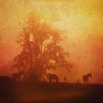 Morning Bliss by Stephanie Calhoun
