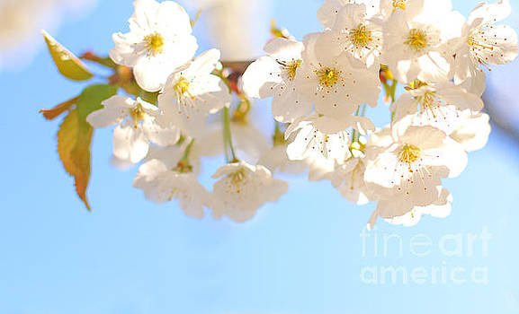 Morning Blossom by Susan Wall