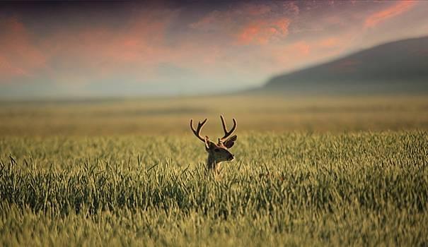 Morning Buck by Byron Fair