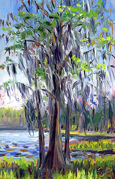 Morning Cypress by Stacey Breheny
