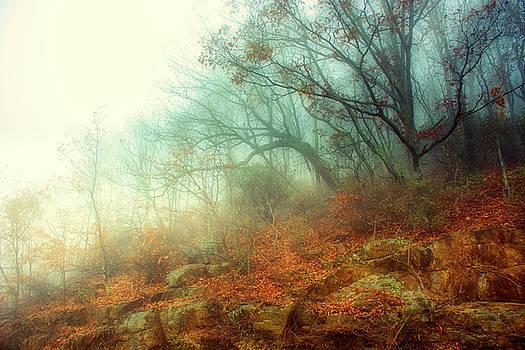 Morning by Daniel Gundlach