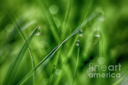 Morning dew drops 2 by Veikko Suikkanen
