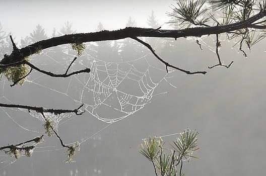 Morning Dew by Erin Clausen
