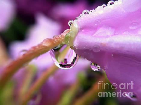 Morning Dew by Kerri Farley