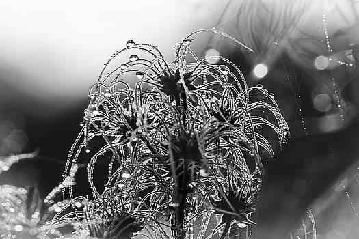 Morning Dew by Nigel Spencer