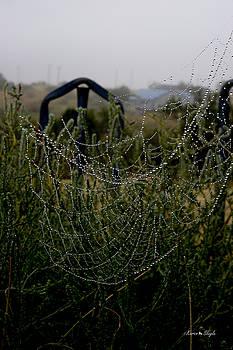 Karen Slagle - Morning Dew on Spider Webs