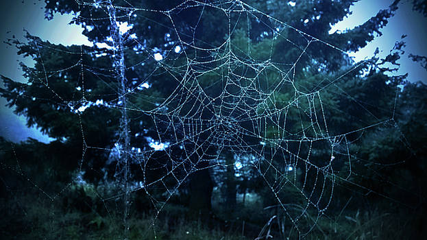 Morning Dew Spider Web by Pacific Northwest Imagery