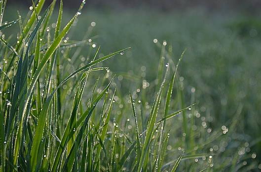 Morning Dew by Stella Marin