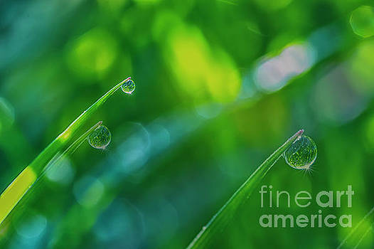 Morning Dewdrops V by Veikko Suikkanen