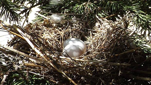 Morning Dove Nest by Dennis Pintoski