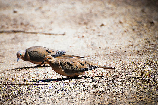 Morning doves by Kevin Heussner