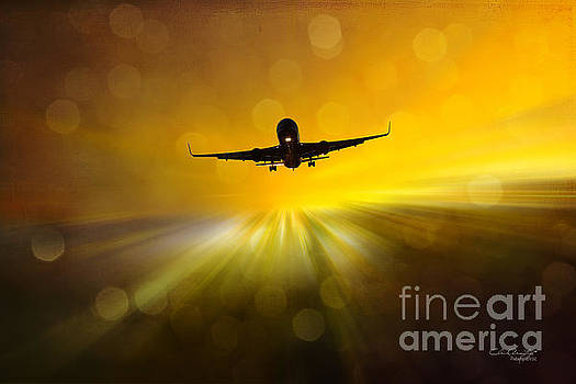 Morning Flight by Chris Armytage