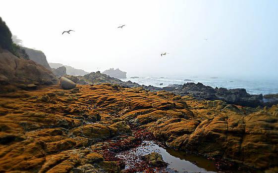 Glenn McCarthy Art and Photography - Morning Fog At Moonstone Beach - Cambria