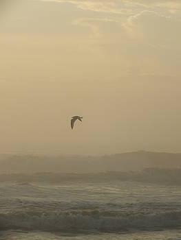 Cindy Treger - Morning Fog