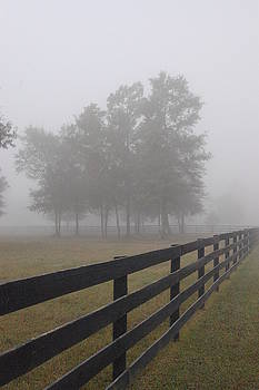 DONNA BENTLEY - Morning Fog