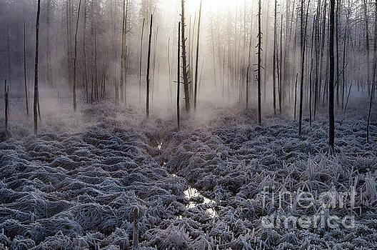 Bob Phillips - Morning Fog in Yellowstone One