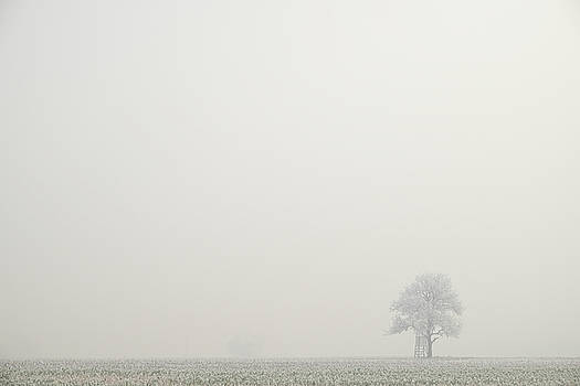 Martin Stankewitz - morning fog lonesome tree winter landscape
