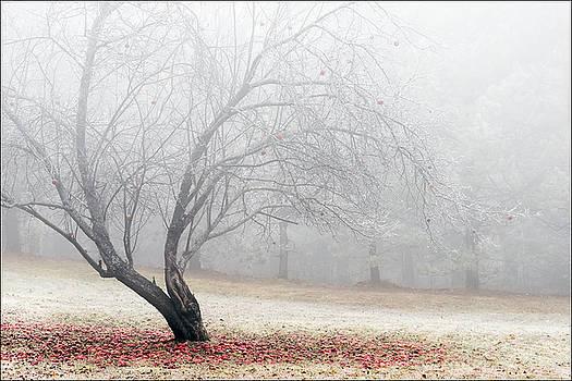 Morning Fog by Michael Bufis