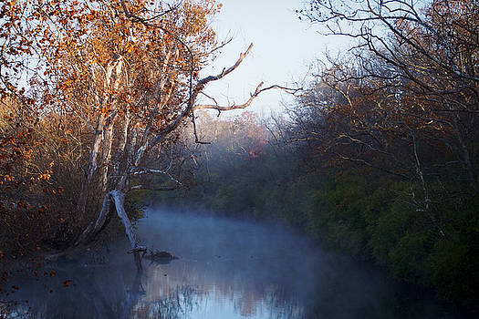 Morning Fog by Tony DellOrfano