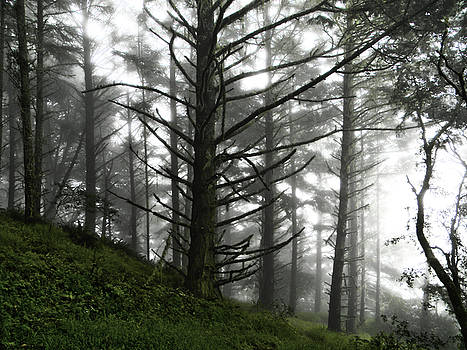 Morning Forest Fog II by Pacific Northwest Imagery