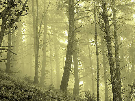 Morning Forest Fog by Pacific Northwest Imagery