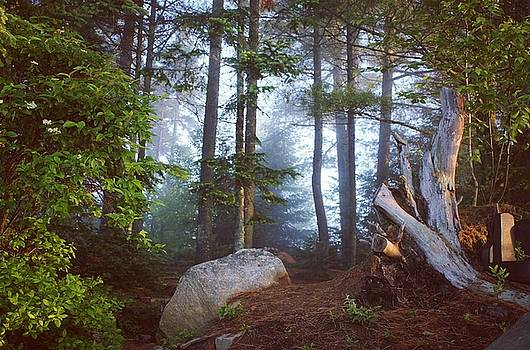 Morning forest light by Jessica Tabora