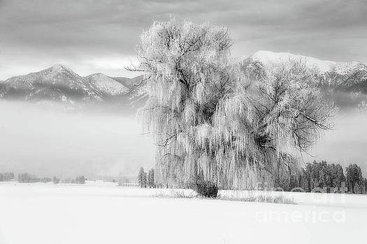 Morning Frost by Danny Nestor