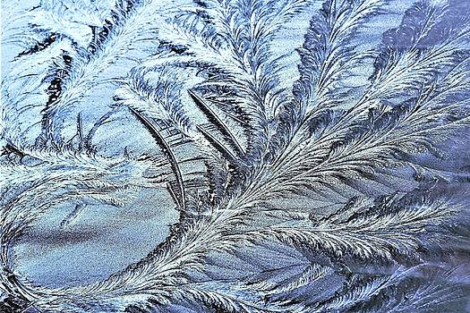Morning Frost - The Dragon Tail by Kim Bemis