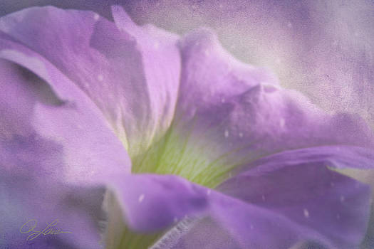 Morning Glory by Ann Lauwers