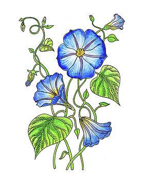 Morning Glory Botanical Watercolor  by Irina Sztukowski
