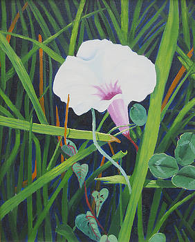 Morning Glory by D T LaVercombe