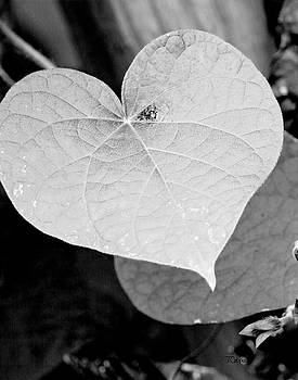 Morning Glory Heart by Tonya Cooper
