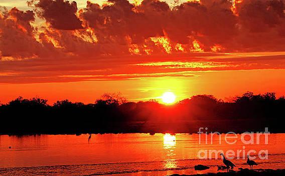 Morning glory, Namibia by Wibke W