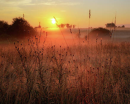 Morning Glow 2016 by Bill Wakeley
